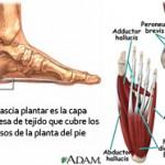 anatomia_pie